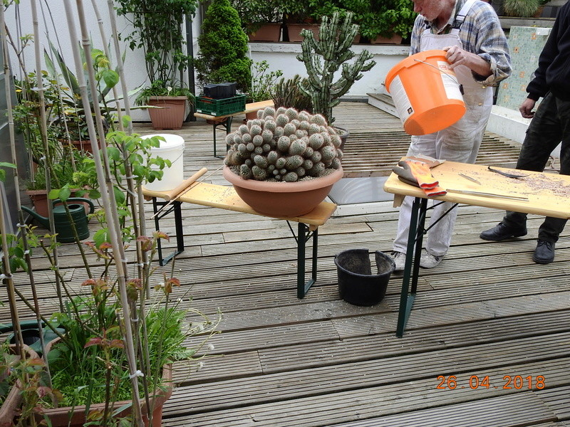 Cacti and Sukkulent in Köln, every day new flowers in the greenhouse Part 192 Bild2121