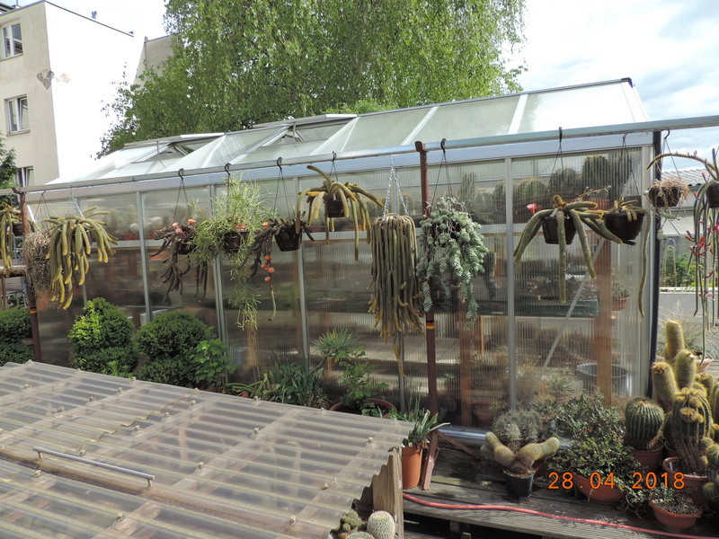 Cacti and Sukkulent in Köln, every day new flowers in the greenhouse Part 193 Bild2127