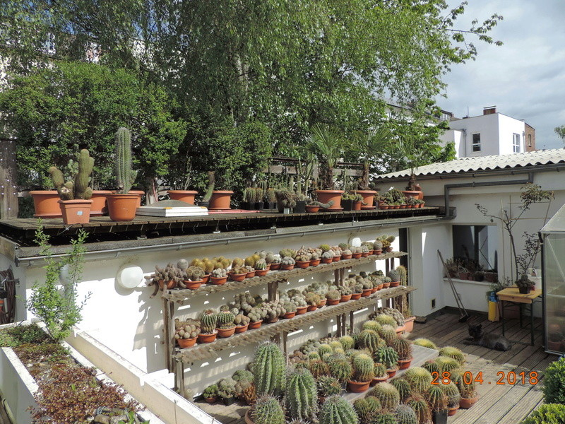 Cacti and Sukkulent in Köln, every day new flowers in the greenhouse Part 193 Bild2130