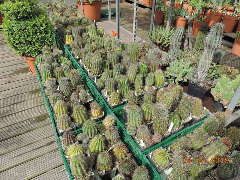 Cacti and Sukkulent in Köln, every day new flowers in the greenhouse Part 193 Bild2132