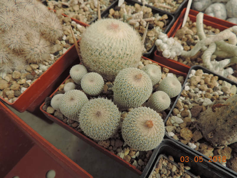 Cacti and Sukkulent in Köln, every day new flowers in the greenhouse Part 193 Bild2262