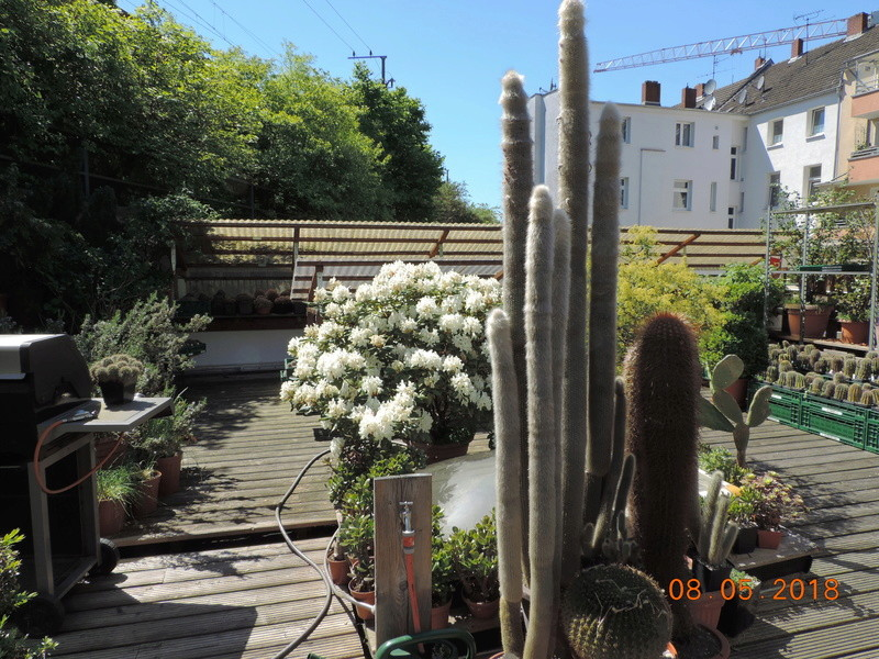 Cacti and Sukkulent in Köln, every day new flowers in the greenhouse Part 194 Bild2305