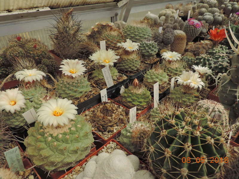Cacti and Sukkulent in Köln, every day new flowers in the greenhouse Part 194 Bild2353