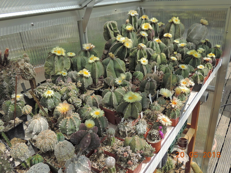Cacti and Sukkulent in Köln, every day new flowers in the greenhouse Part 194 Bild2364