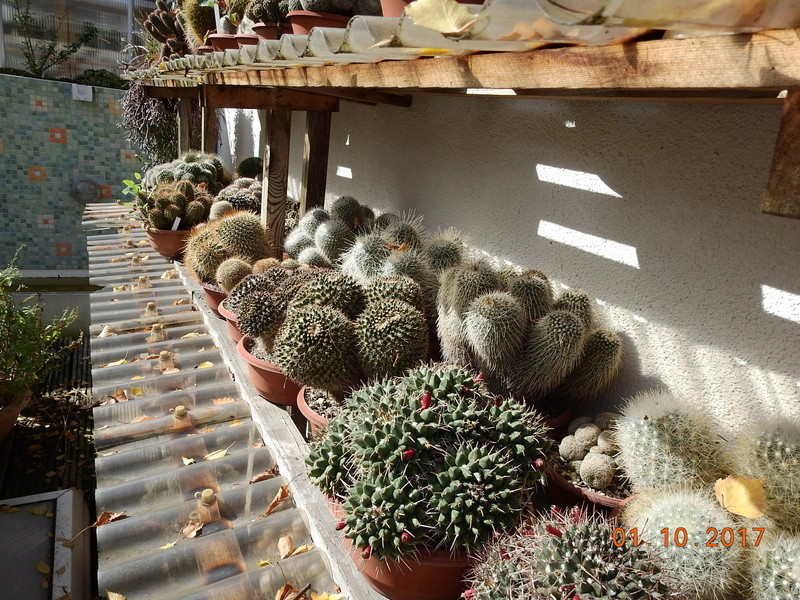 Cacti and Sukkulent in Köln, every day new flowers in the greenhouse Part 177 Bild_116