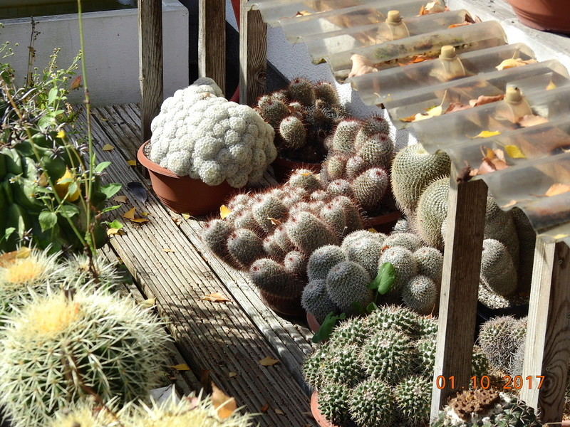 Cacti and Sukkulent in Köln, every day new flowers in the greenhouse Part 177 Bild_120