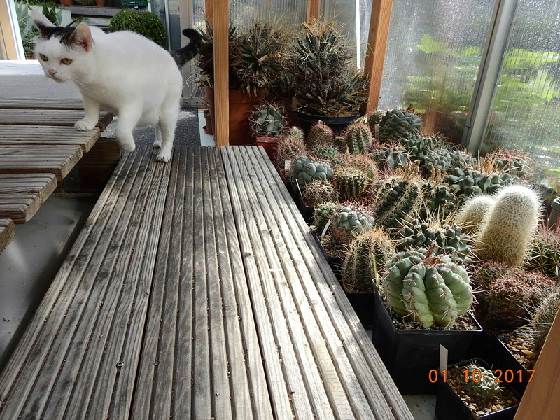 Cacti and Sukkulent in Köln, every day new flowers in the greenhouse Part 177 Bild_126