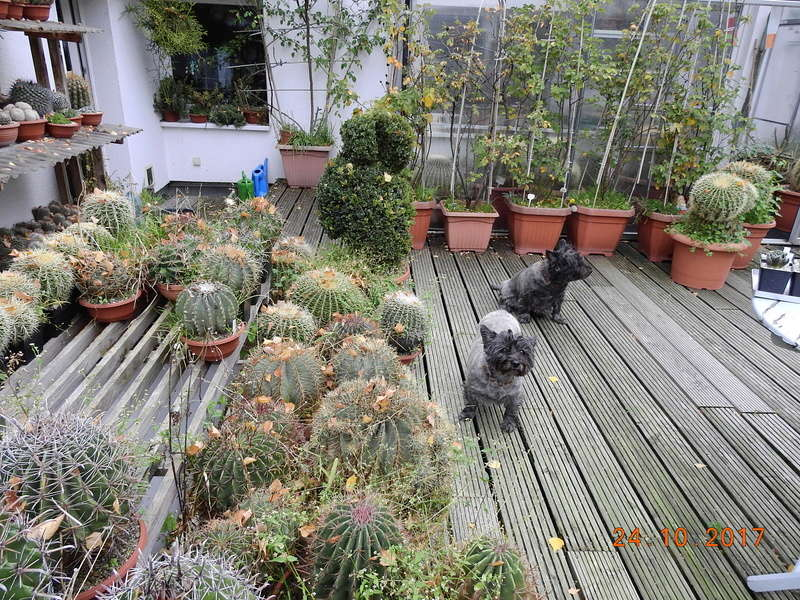 Cacti and Sukkulent in Köln, every day new flowers in the greenhouse Part 178 Bild_210