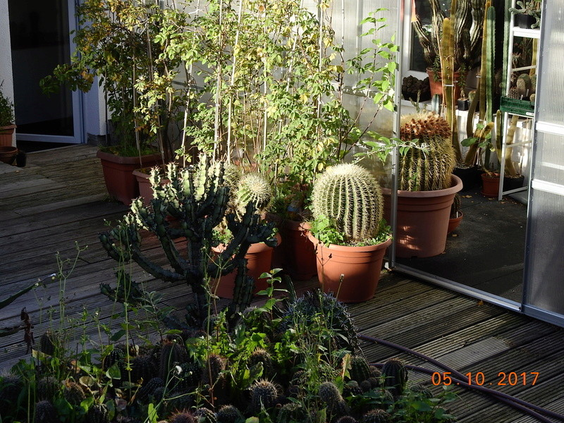 Cacti and Sukkulent in Köln, every day new flowers in the greenhouse Part 178 Bild_254