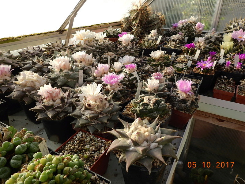 Cacti and Sukkulent in Köln, every day new flowers in the greenhouse Part 178 Bild_255
