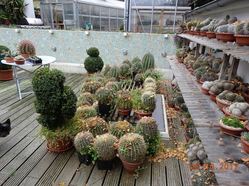 Cacti and Sukkulent in Köln, every day new flowers in the greenhouse Part 178 Bild_265