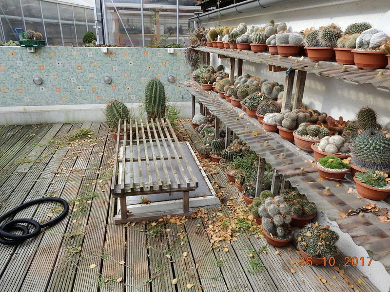 Cacti and Sukkulent in Köln, every day new flowers in the greenhouse Part 178 Bild_267