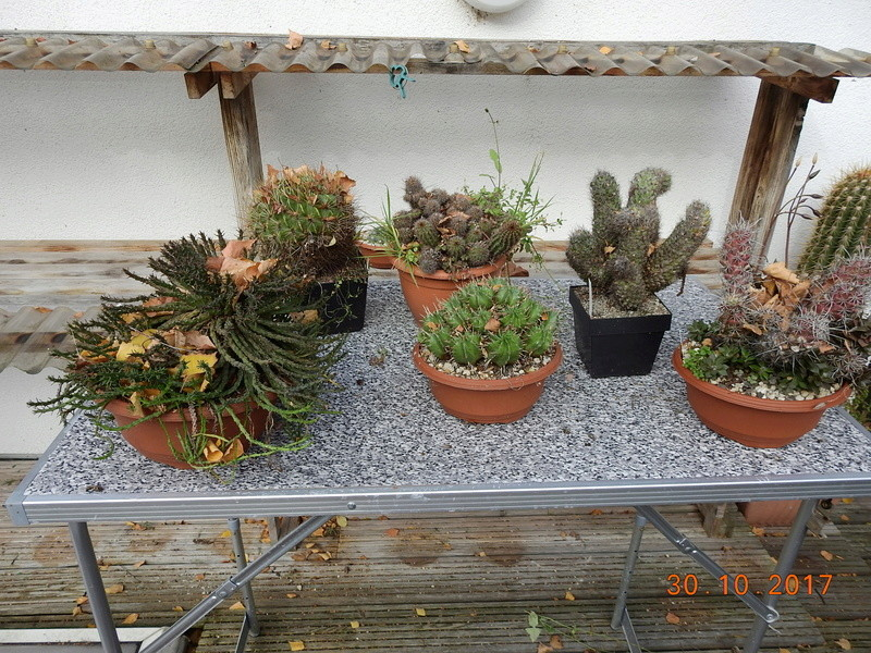 Cacti and Sukkulent in Köln, every day new flowers in the greenhouse Part 178 Bild_282