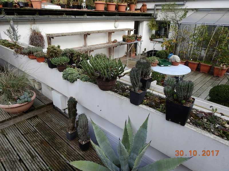 Cacti and Sukkulent in Köln, every day new flowers in the greenhouse Part 178 Bild_283