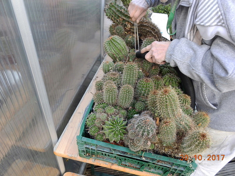 Cacti and Sukkulent in Köln, every day new flowers in the greenhouse Part 178 Bild_288