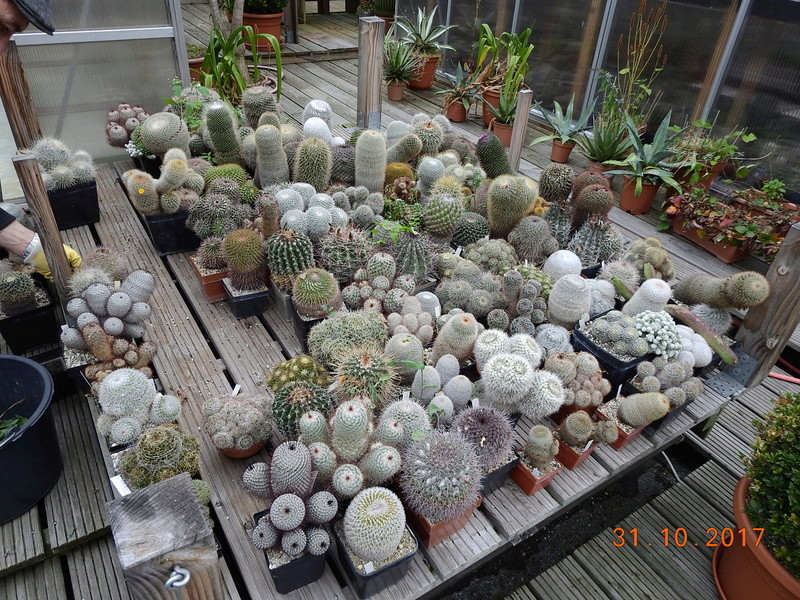 Cacti and Sukkulent in Köln, every day new flowers in the greenhouse Part 179 Bild_301