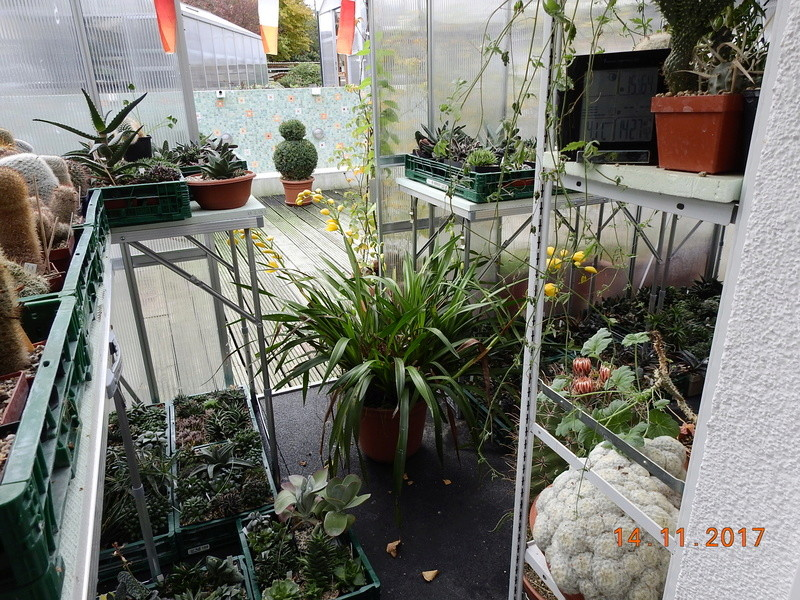 Cacti and Sukkulent in Köln, every day new flowers in the greenhouse Part 180 Bild_439