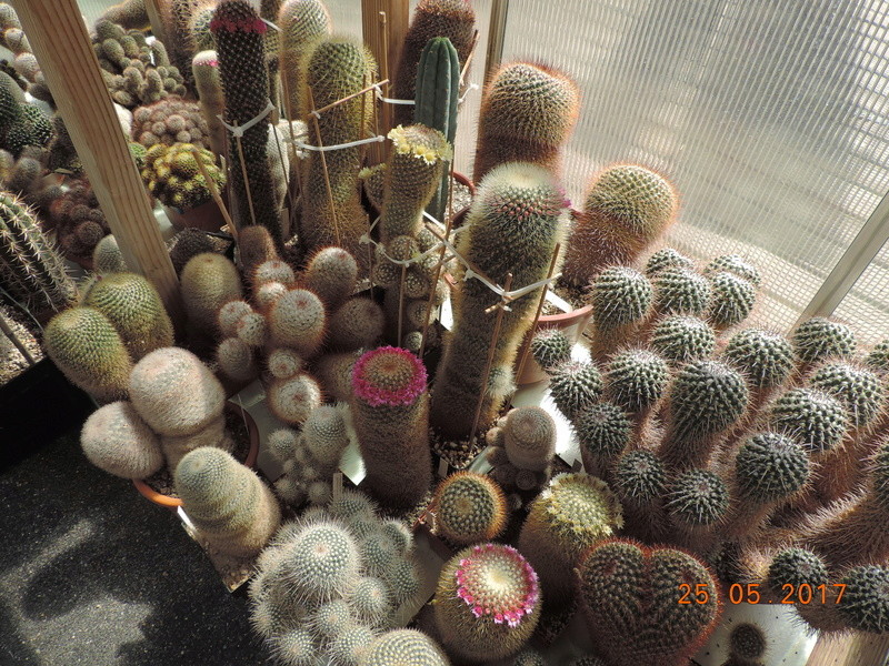 Cacti and Sukkulent in Köln, every day new flowers in the greenhouse Part 180 Bild_456