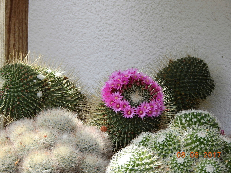 Cacti and Sukkulent in Köln, every day new flowers in the greenhouse Part 180 Bild_560