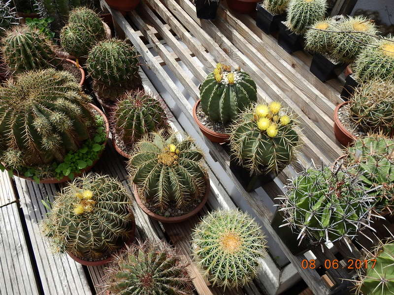 Cacti and Sukkulent in Köln, every day new flowers in the greenhouse Part 180 Bild_562