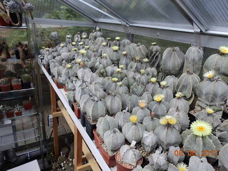 Cacti and Sukkulent in Köln, every day new flowers in the greenhouse Part 180 Bild_570