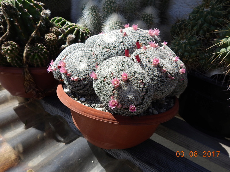 Cacti and Sukkulent in Köln, every day new flowers in the greenhouse Part 181 Bild_746
