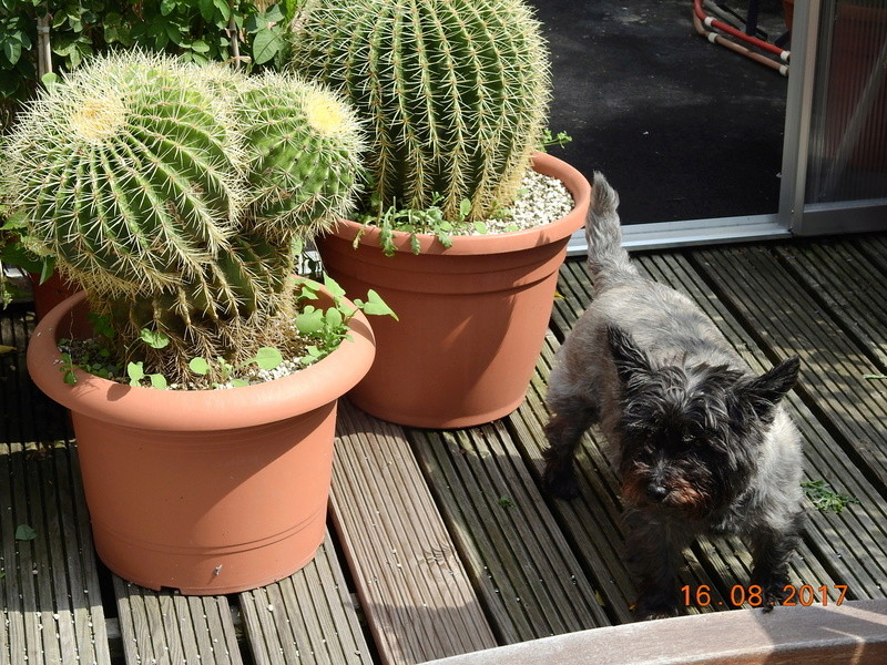 Cacti and Sukkulent in Köln, every day new flowers in the greenhouse Part 182 Bild_825