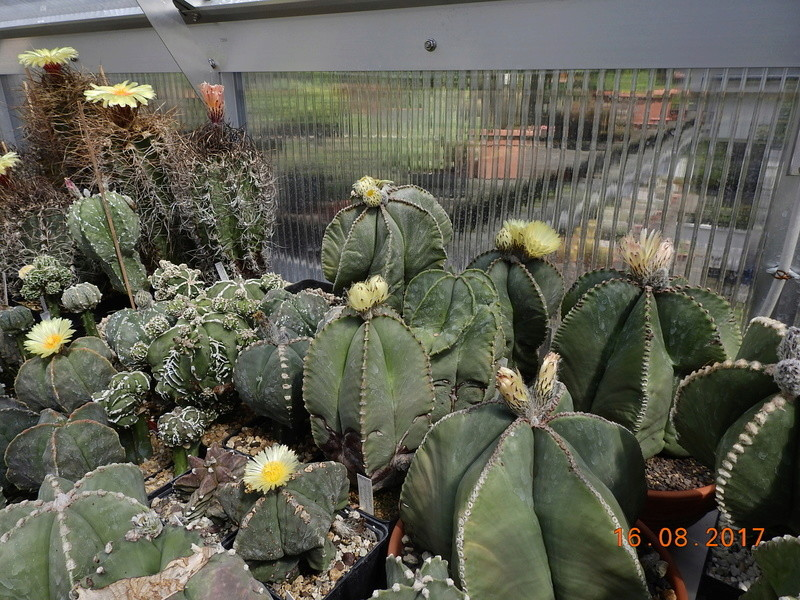 Cacti and Sukkulent in Köln, every day new flowers in the greenhouse Part 182 Bild_832