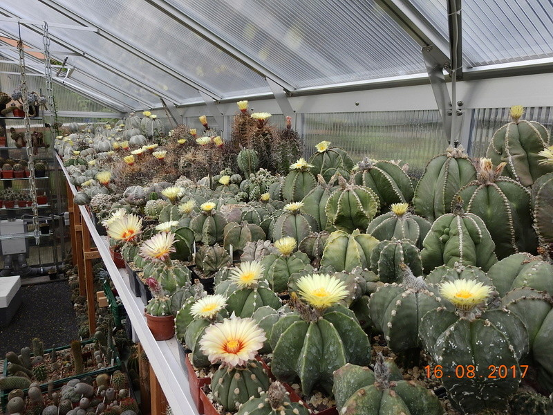 Cacti and Sukkulent in Köln, every day new flowers in the greenhouse Part 182 Bild_862