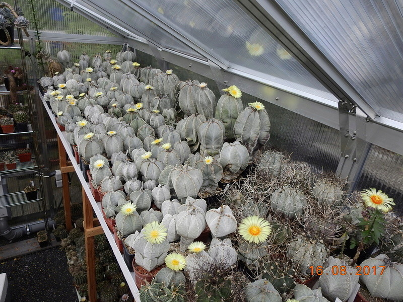 Cacti and Sukkulent in Köln, every day new flowers in the greenhouse Part 182 Bild_869
