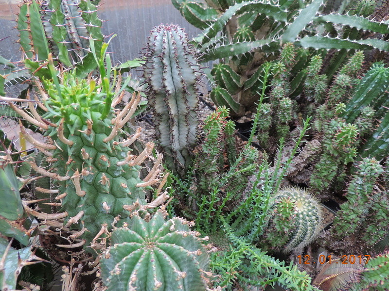 Cacti and Sukkulent in Köln, every day new flowers in the greenhouse Part 182 Bild_903