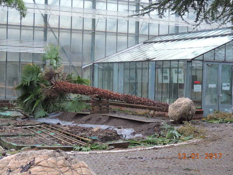 Cacti and Sukkulent in Köln, every day new flowers in the greenhouse Part 183 Bild_907