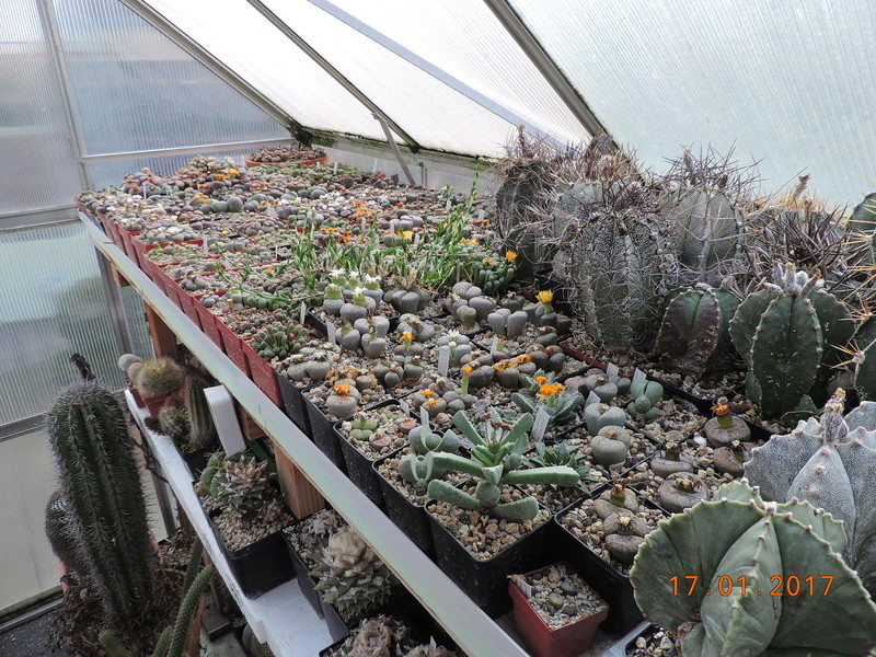 Cacti and Sukkulent in Köln, every day new flowers in the greenhouse Part 183 Bild_916