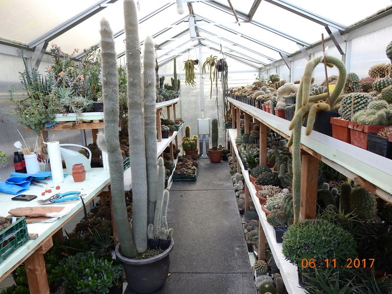 Cacti and Sukkulent in Köln, every day new flowers in the greenhouse Part 183 Bild_930