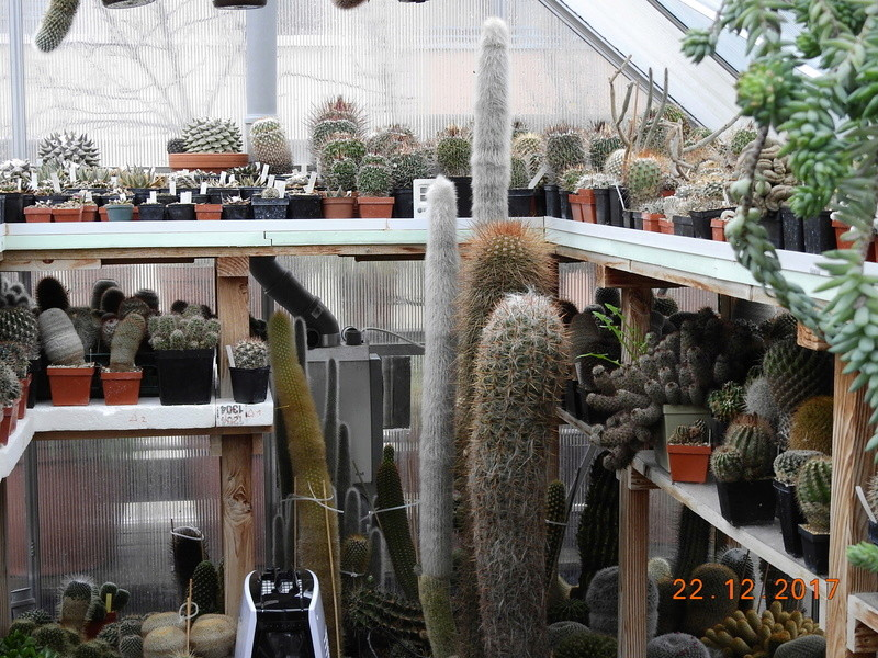 Cacti and Sukkulent in Köln, every day new flowers in the greenhouse Part 183 Bild_932