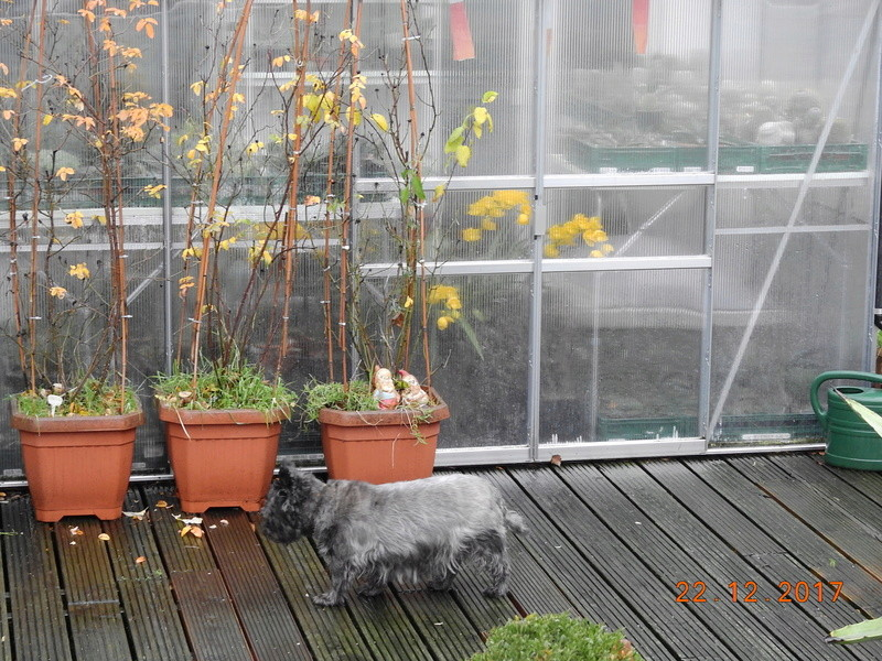Cacti and Sukkulent in Köln, every day new flowers in the greenhouse Part 183 Bild_933