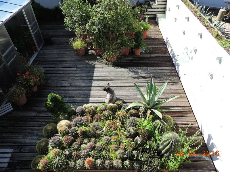 Cacti and Sukkulent in Köln, every day new flowers in the greenhouse Part 183 Bild_972