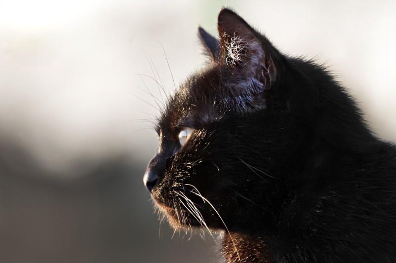 Mon chat  Dsc_4311