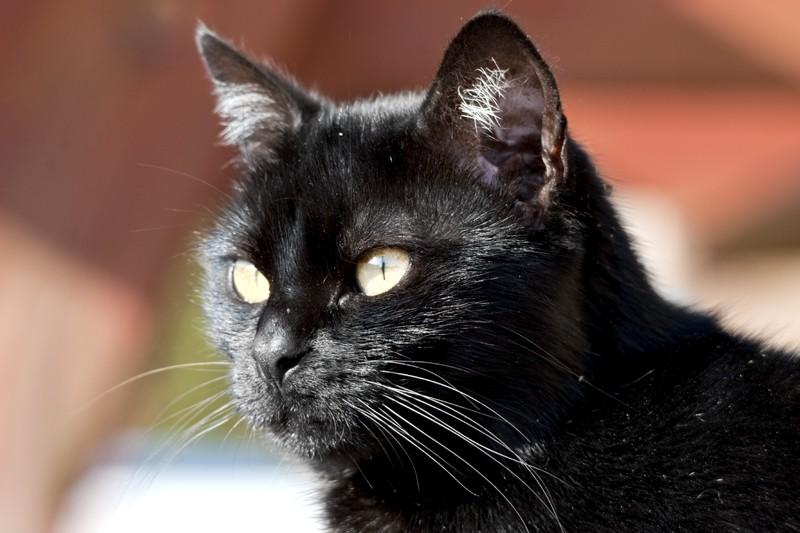 Mon chat  Dsc_4510