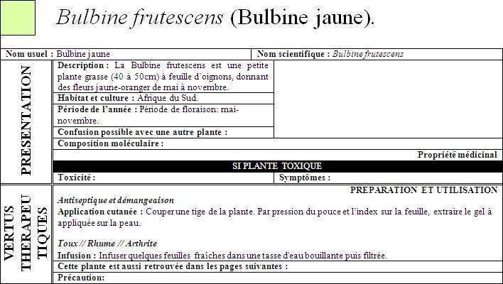 [Propriété] BULBINE FRUTESCENS (Bulbine jaune) Bulbin10