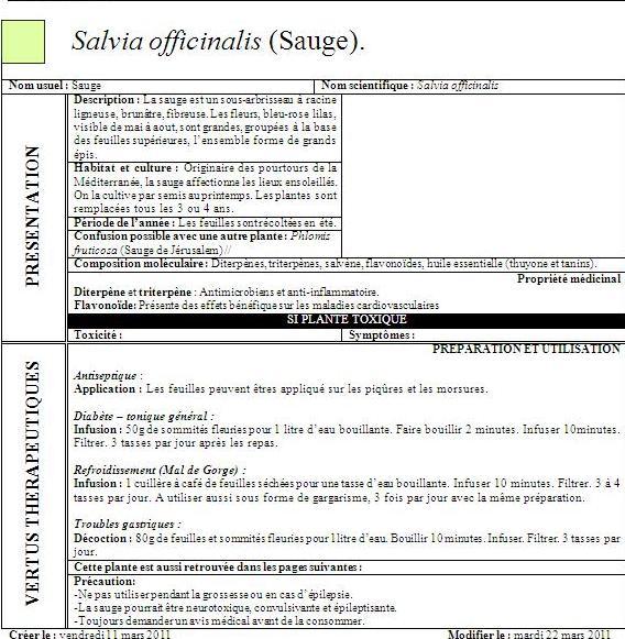 [Propriété] SALVIA OFFICINALIS (Sauge) Sauge11