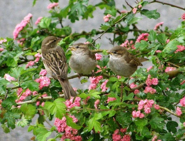 Bon Vendredi Oiseau10