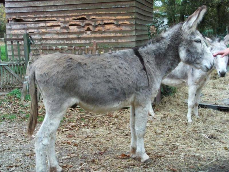 UGO (UGOo) - Âne né en 2008 - Adopté en décembre 2010 par Gisle - Page 4 File0070