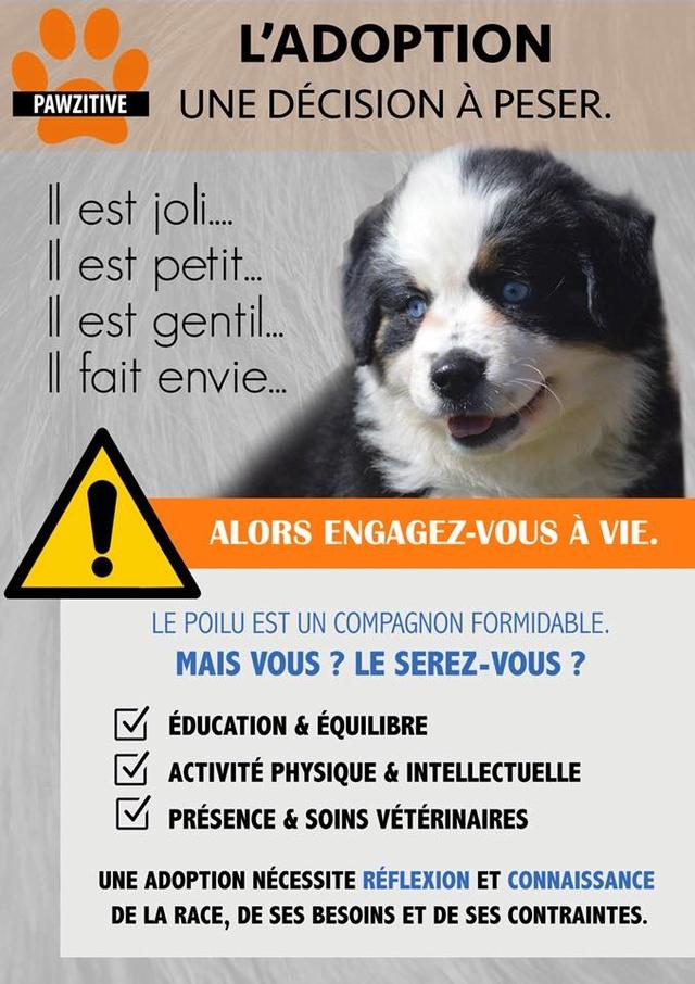 Adoptons! - Page 9 30442510