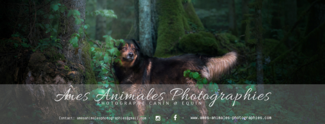 Âmes Animales Photographies - Page 2 Tamsin10