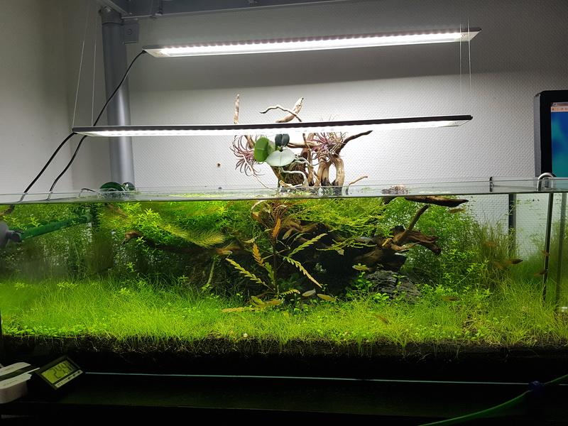 Notre aquarium de bureau 20180111