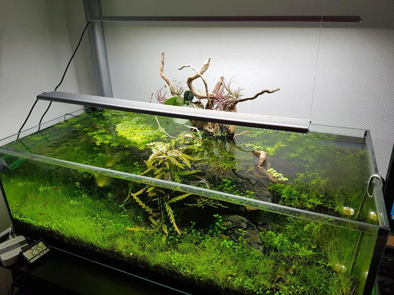 Notre aquarium de bureau 20180112