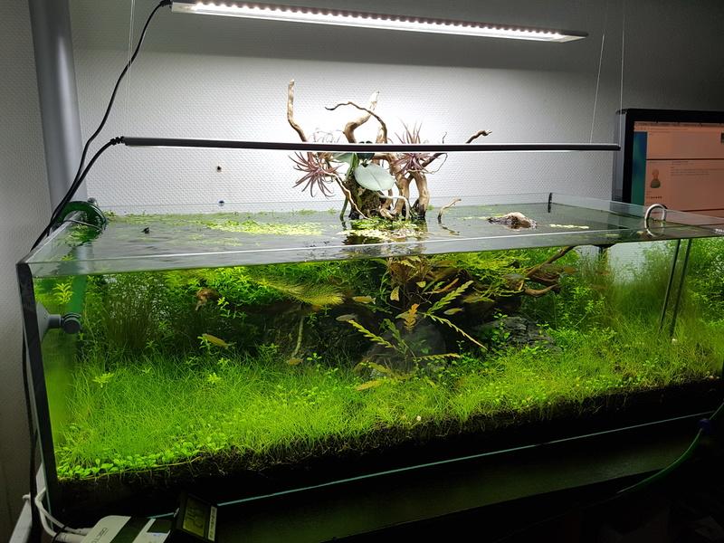 Notre aquarium de bureau 20180113