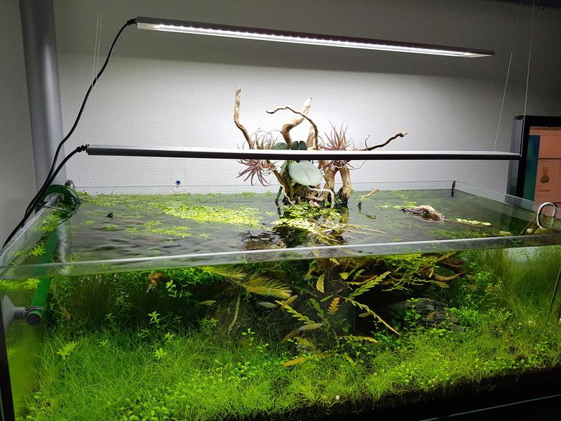 Notre aquarium de bureau 20180114