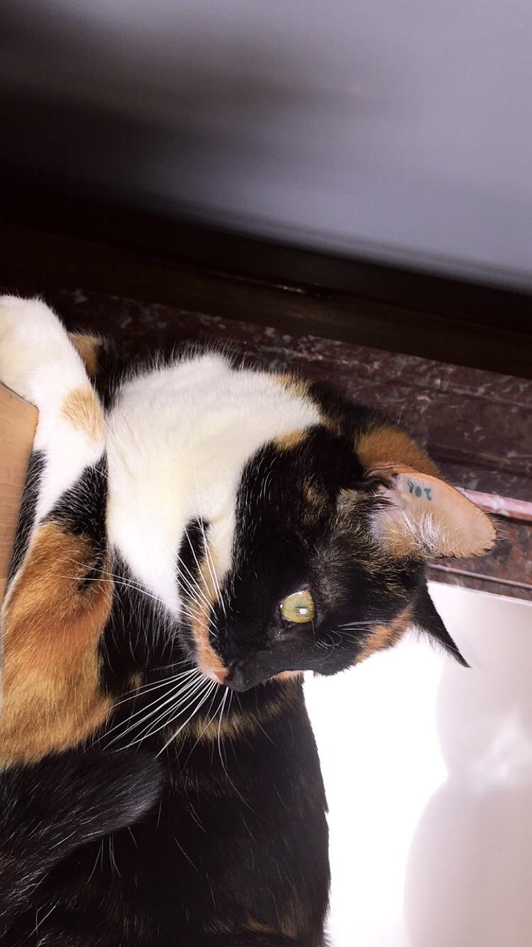 nilla née en novembre 2016 (réservée) Photo_10